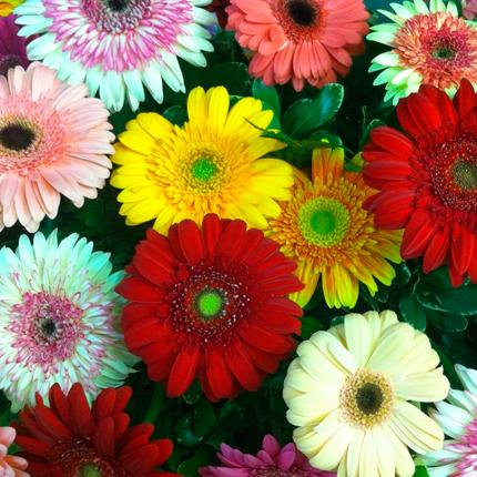 Другие виды цветов, похожие на ромашку