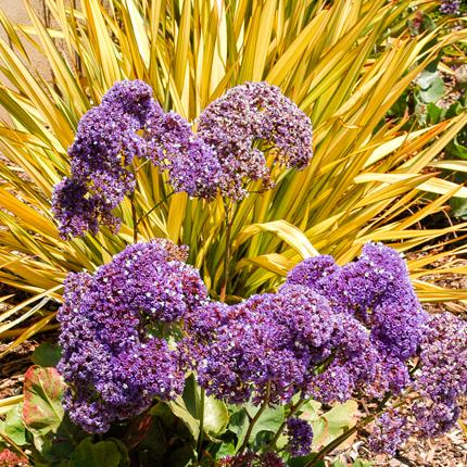 Сочетание с другими растениями в саду