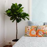 Які кімнатні рослини підходять для спальні