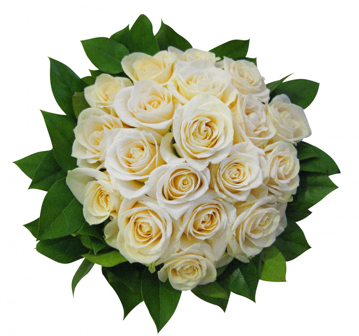 Цветы для девушки Рака