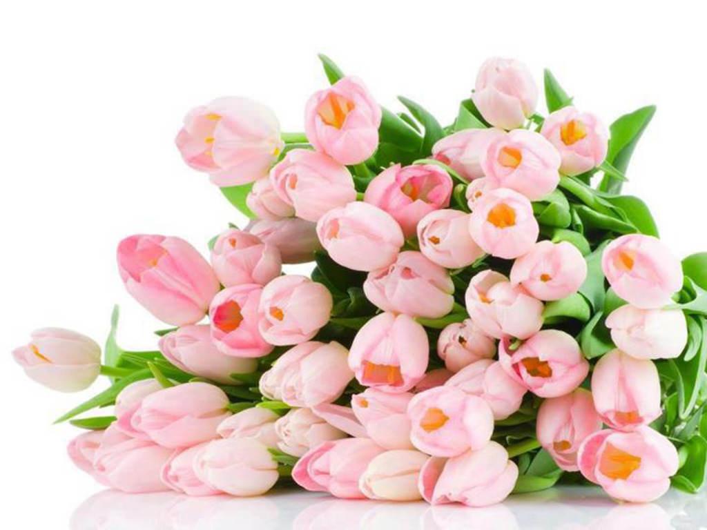 какие цветы дарить водолею