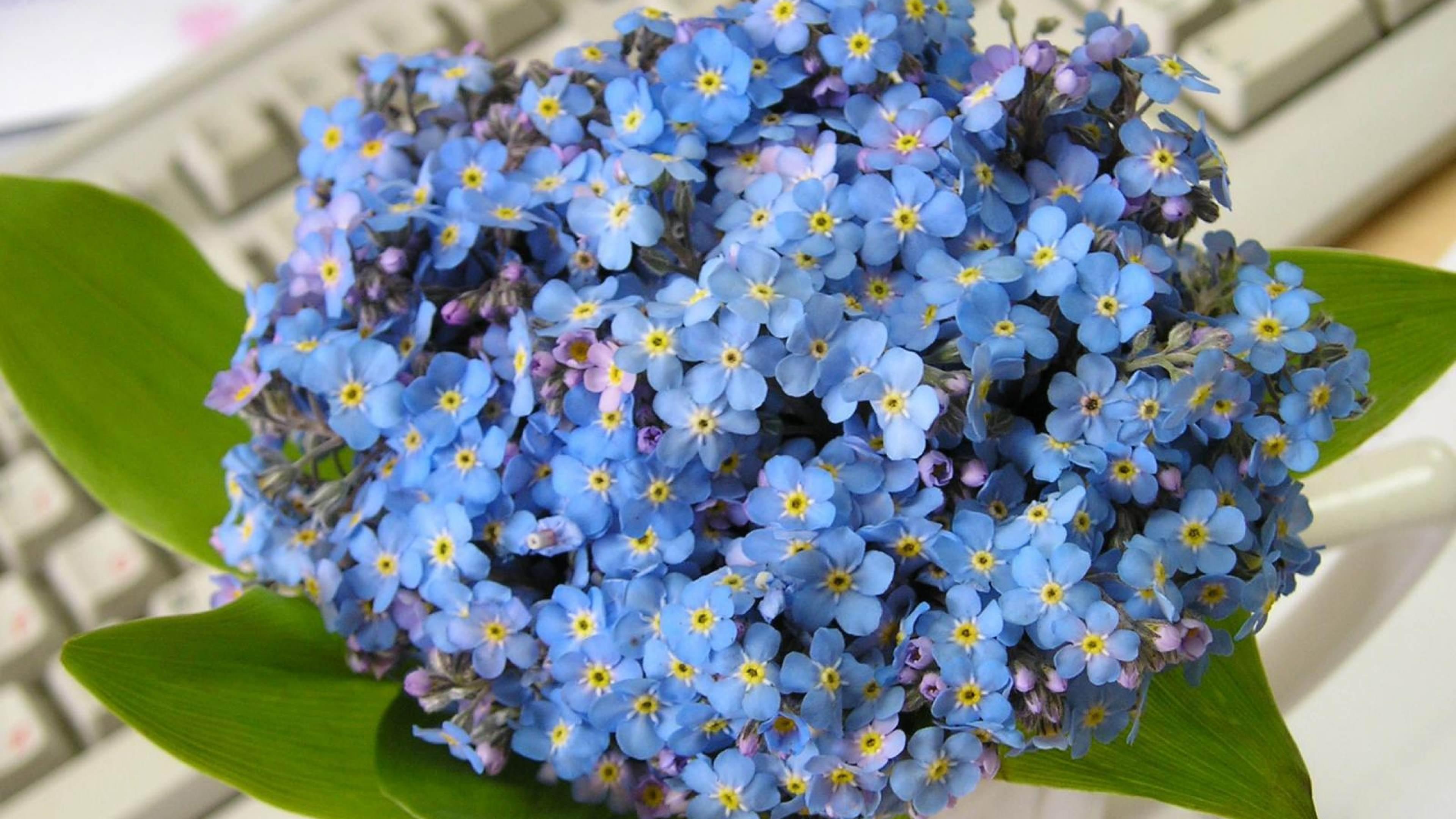 цветы водолею