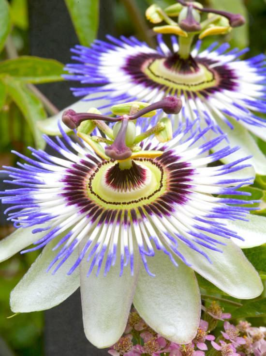 Фото самые необычные цветы мира
