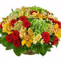 цветы мира зеленая гортензия