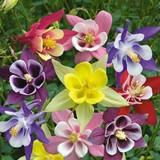 Самые красивые цветы мира