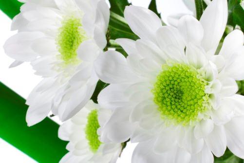 букет цветов для весов
