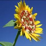 Доставка цветов в Италию: пламенный привет солнечной стране!