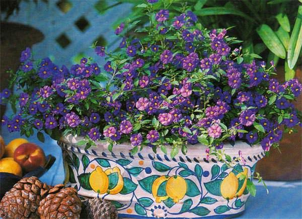 весенние цветы в горшках