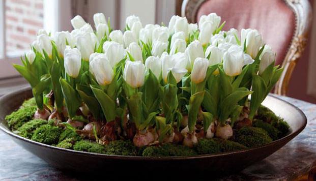 Как из луковиц вырастить тюльпаны в домашних условиях