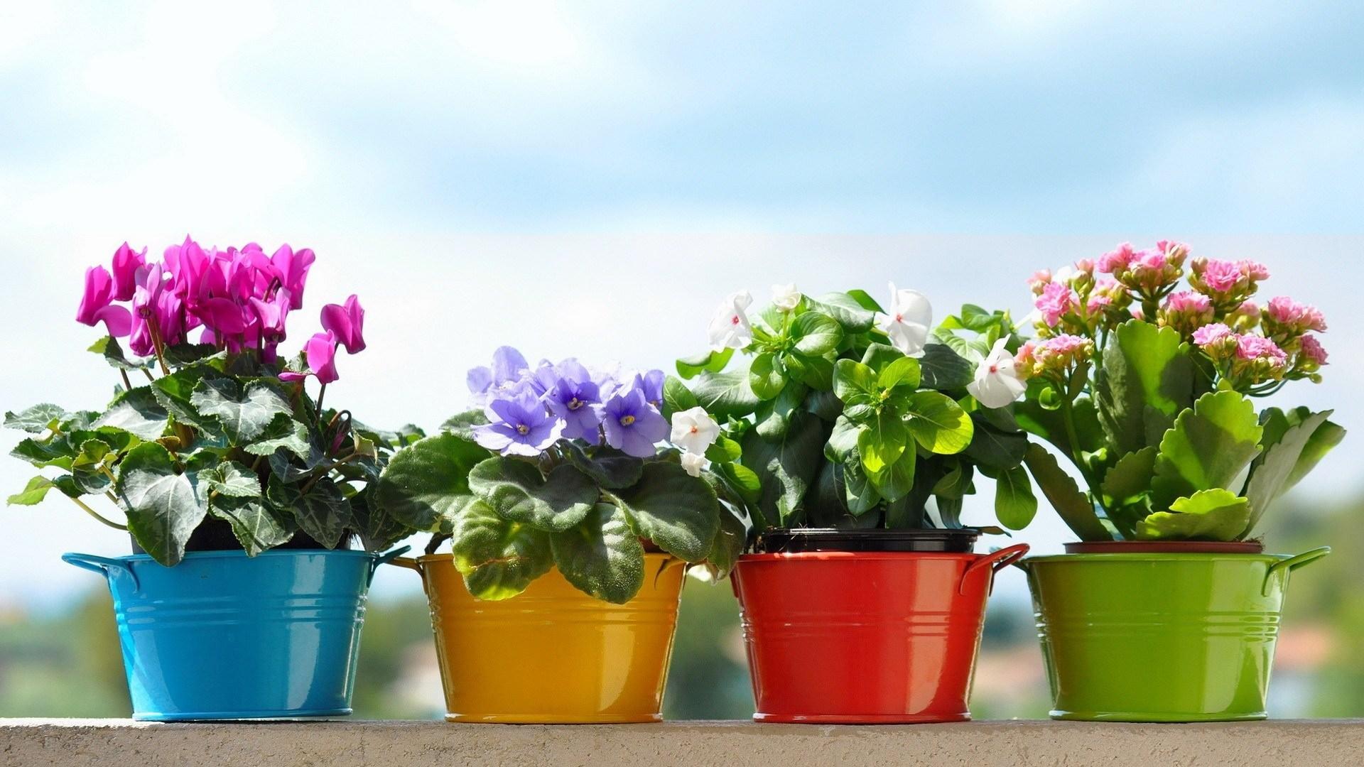 цветы а горшках