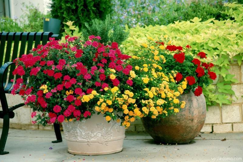 кустовые розы в США