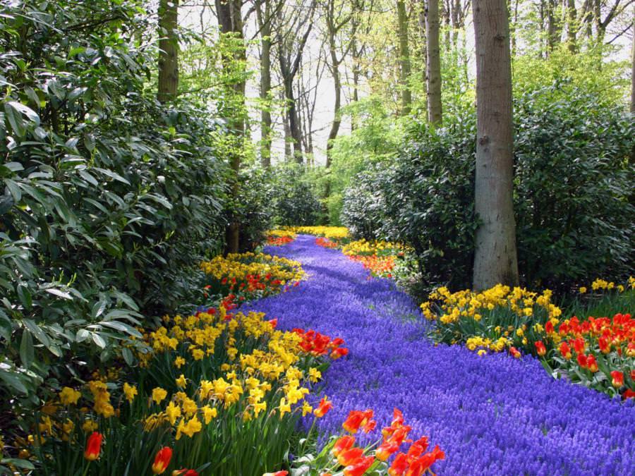 цветочные фкстивали в Европе
