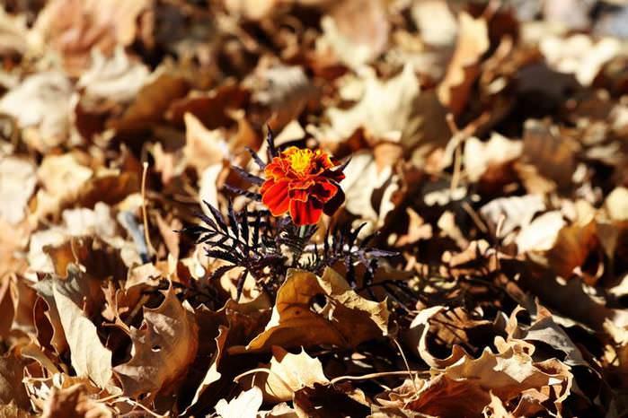 флора Кыргызстана