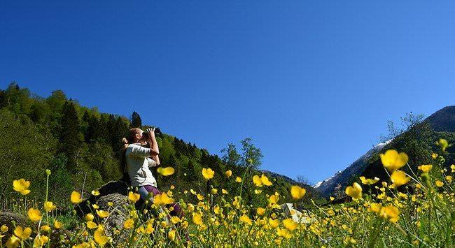 цветущий луг Грузии