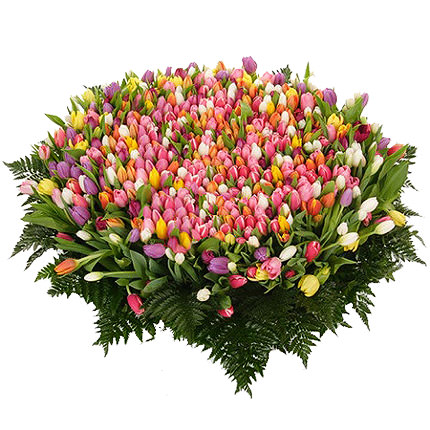 501 multi-colored tulip - delivery in Ukraine