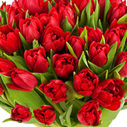51 red tulip - delivery in Ukraine