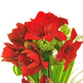 Bouquet of amaryllis - order with delivery