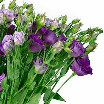 "Bouquet of eustoma ""Mirage"" - order with delivery"