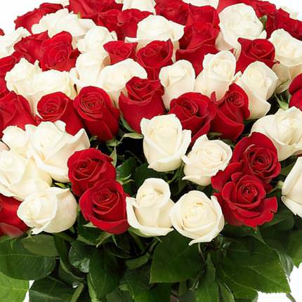 101 red and white rose - delivery in Ukraine