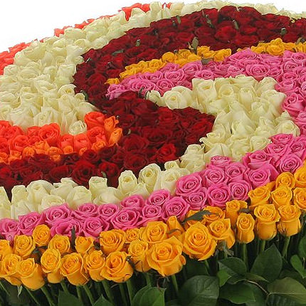 555 multi-colored roses - delivery in Ukraine