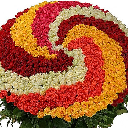 555 multi-colored roses - order with delivery