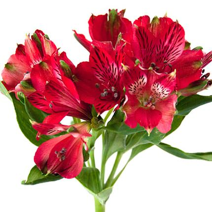 """Bouquet """"Fairytale for Two"""" - order with delivery"""