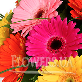 Bright bouquet of Gerbera - delivery in Ukraine