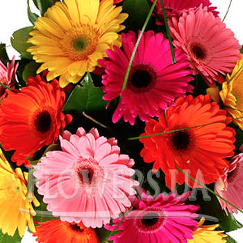 Bright bouquet of Gerbera - order with delivery