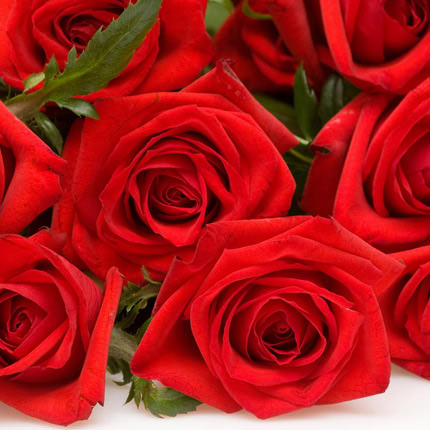 501 red roses - delivery in Ukraine