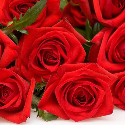 501 червона троянда - доставка по Україні