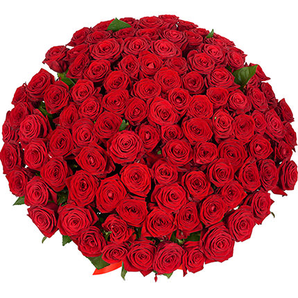 101 red roses with teddy - order with delivery
