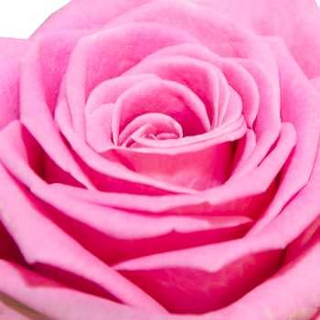 11 розовых роз - заказать с доставкой