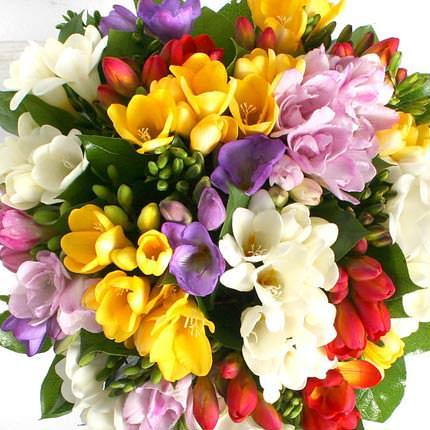 49 multicolored freesias - order with delivery