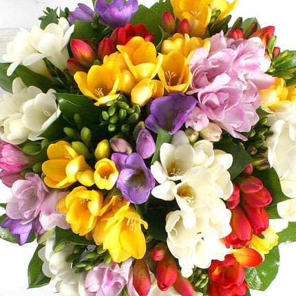 49 разноцветных фрезий - заказать с доставкой