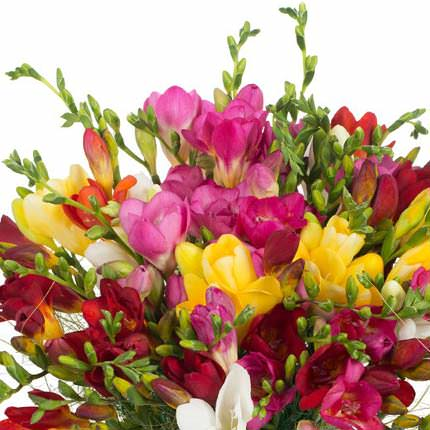 25 multicolored freesias - order with delivery