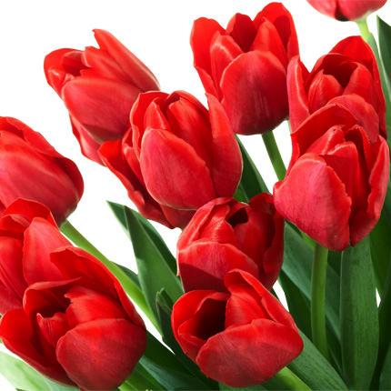Тюльпан красный (поштучно) - заказать с доставкой