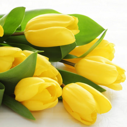 Yellow tulip (by an item) - delivery in Ukraine