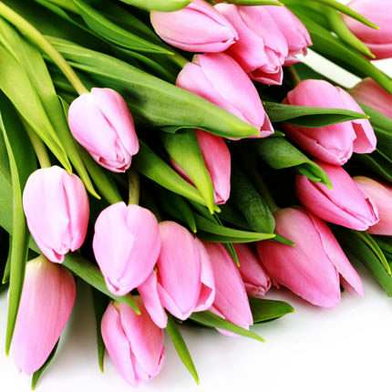 Pink tulip (by an item) - delivery in Ukraine