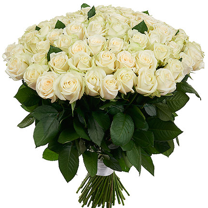 101 white roses - delivery in Ukraine
