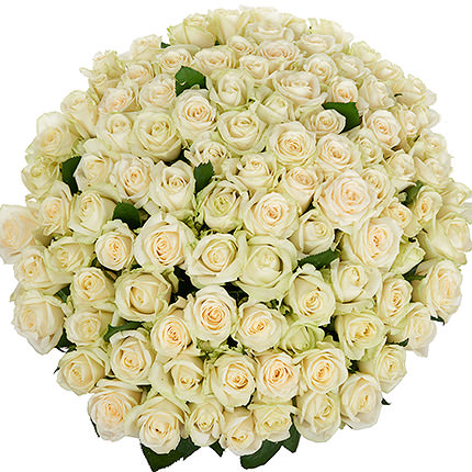 101 white roses - order with delivery
