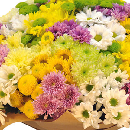 101 multicolored chrysanthemums - order with delivery