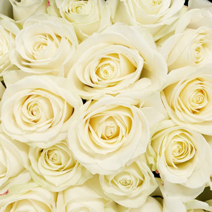 Букет белых роз - доставка по Украине