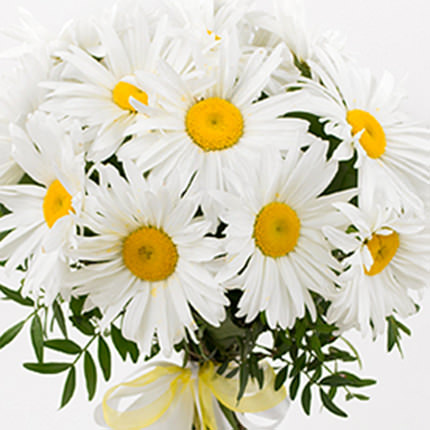 "Bouquet ""15 sunny daisies"" - delivery in Ukraine"