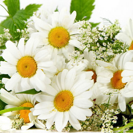 "Bouquet ""15 sunny daisies"" - order with delivery"