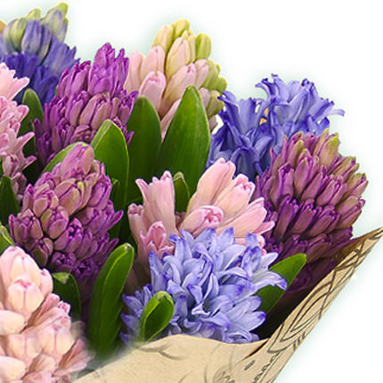 15 multicolored hyacinths - order with delivery