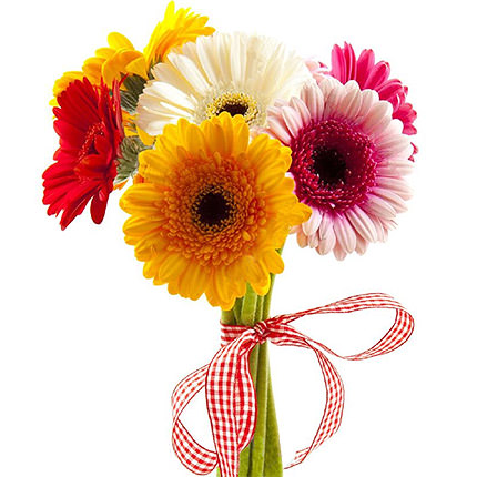 7 different color gerberas - delivery in Ukraine