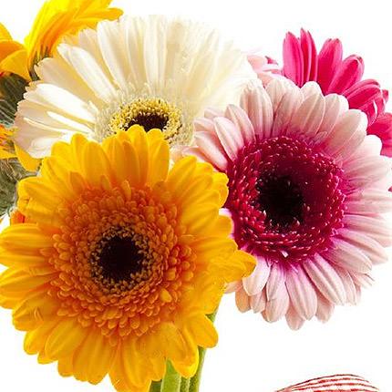 7 разноцветных гербер - заказать с доставкой