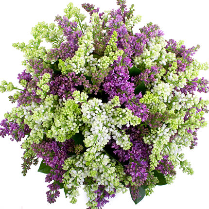 51 branch of lilac - delivery in Ukraine
