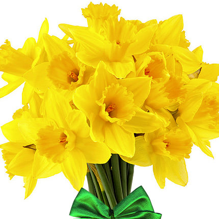 Bouquet of daffodils - delivery in Ukraine
