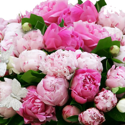51 multicolored peonies - order with delivery